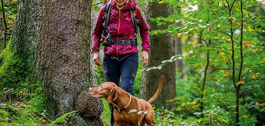 Entdecken_Rudelwandern_Hund2